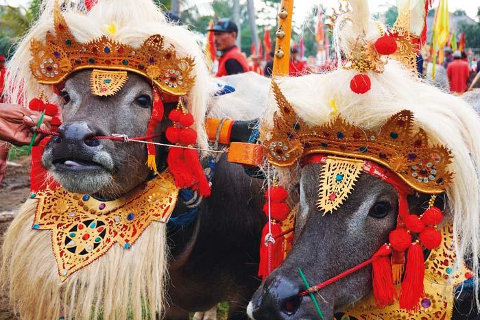Secret Bali 3