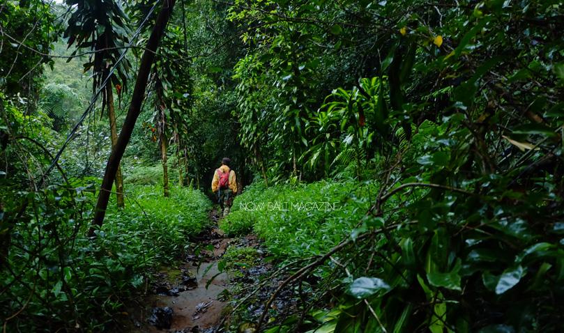bedugul-trekking-bali