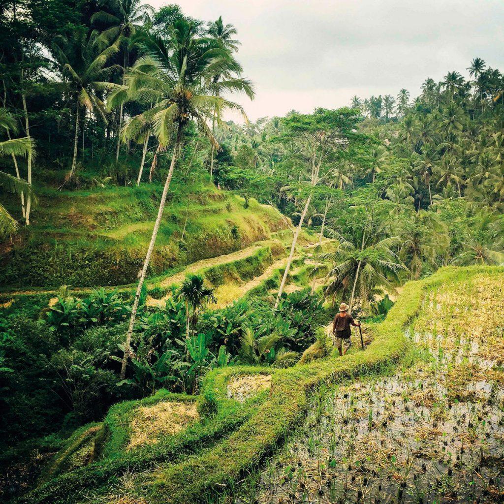 theme-wtd-trekking-ubud-2