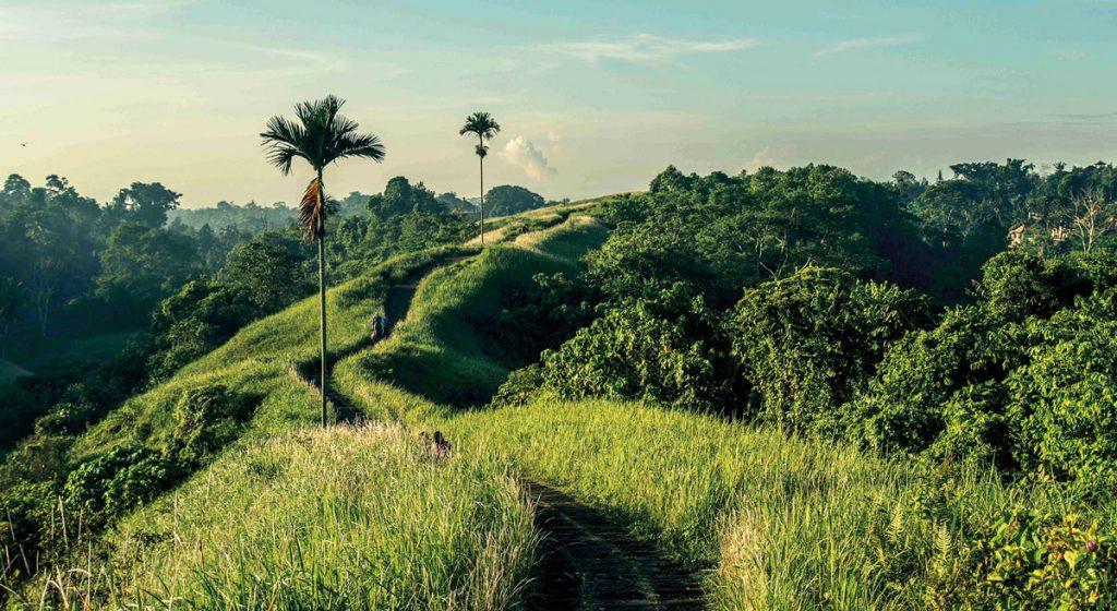 theme-wtd-trekking-ubud-campuhan-hill2