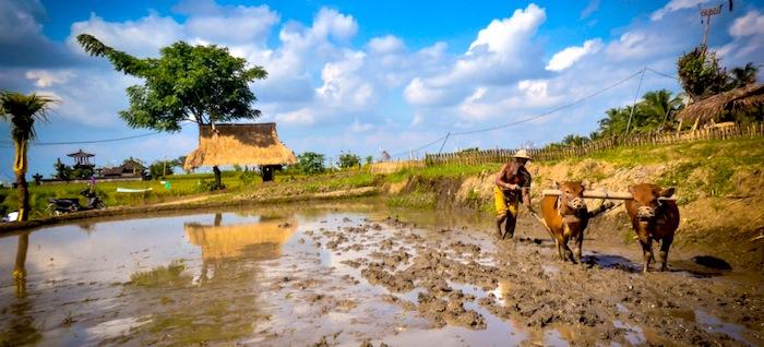 Desa Visesa Permaculture Experience