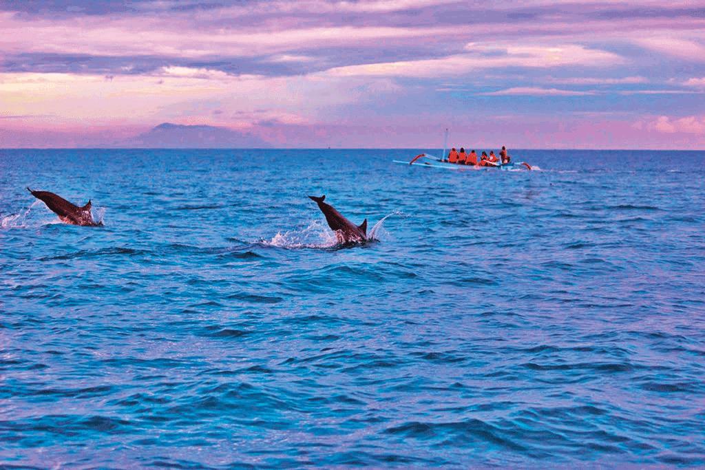 dolphin-lovina-beach-5