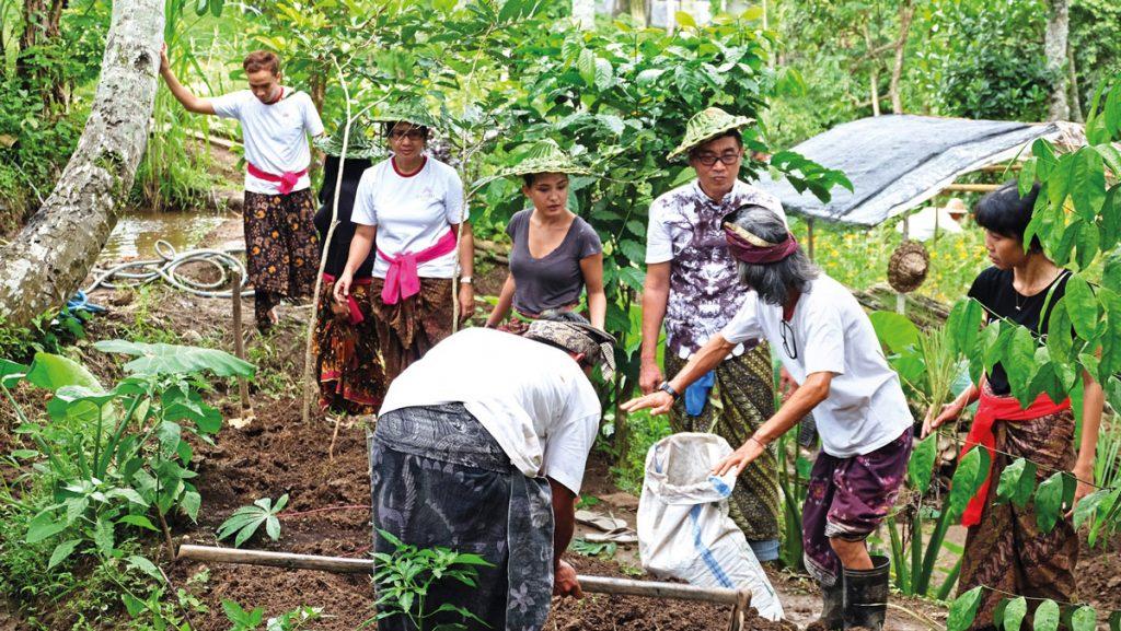 desa visesa ubud permaculture experience