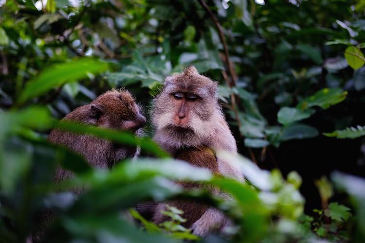 Bali Monkey Forest_ copy