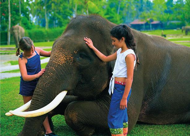 Mason Elephant Park Bali Ubud