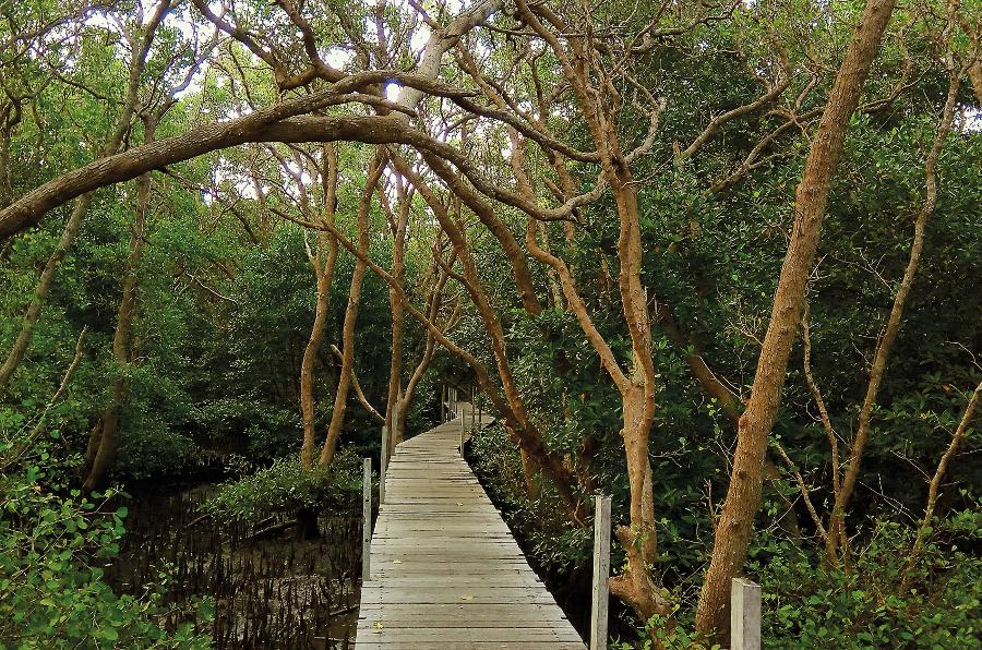 WTD - mangrove (1)