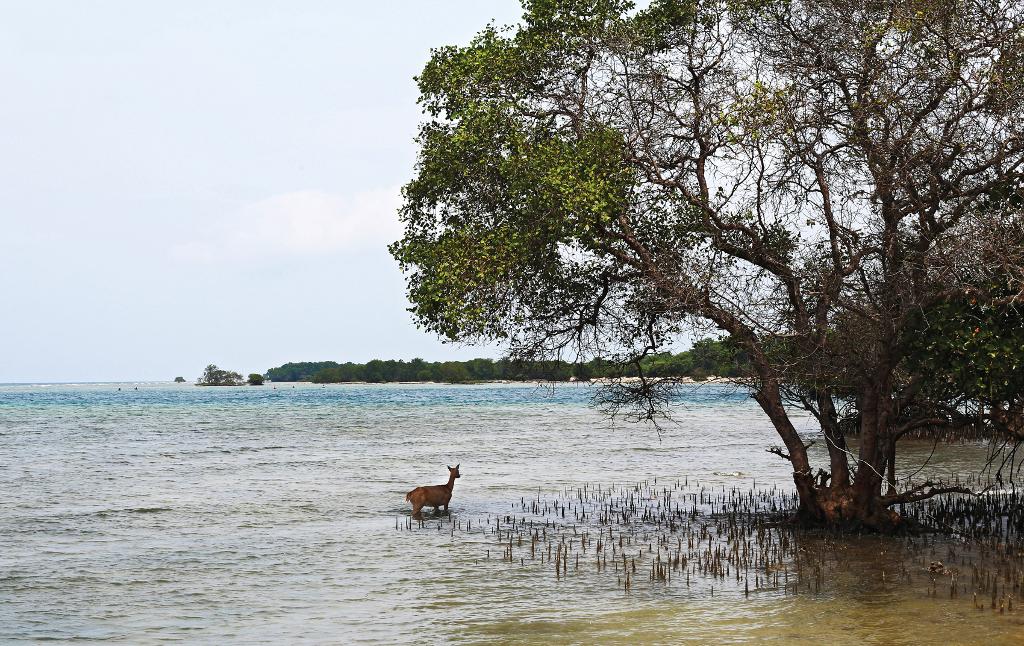Coastal area of the West Bali National Park