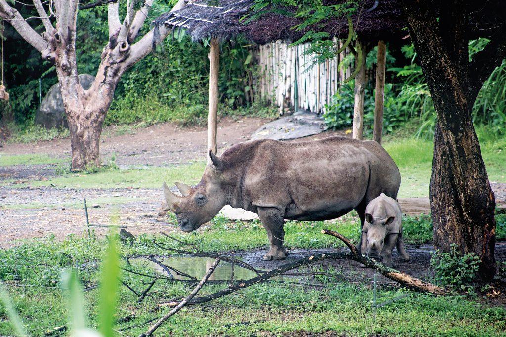 Bali Safari (1)