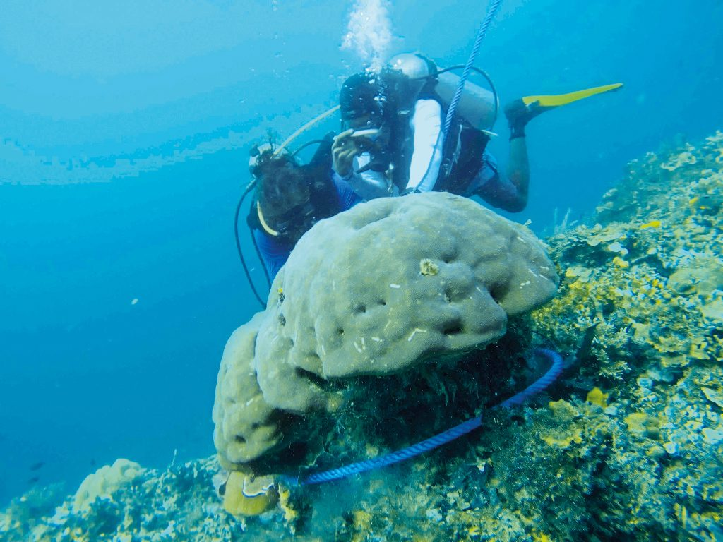 Theme - Coastal Communities - Biosphere Foundation - crown of thorns removal and coral transplant (4)