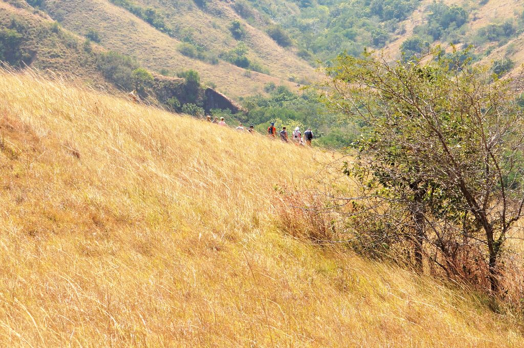 guided trek through the hilly landscapes of Rinca with a local ranger and Plataran team