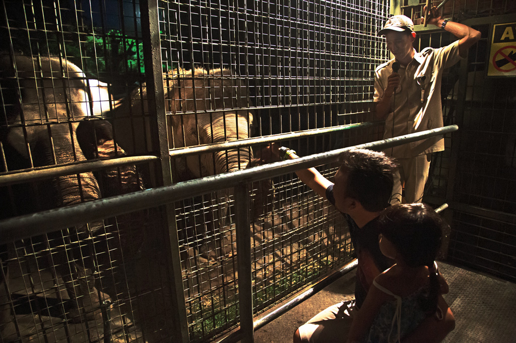 Bali-Safari-(2)