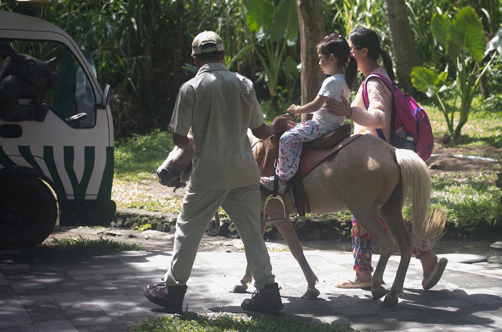 Bali-Safari-(5)