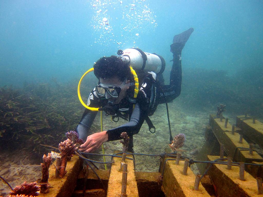 environment-Coral-triangle-centre-Coral-Transplantation-in-Nusa-Penida