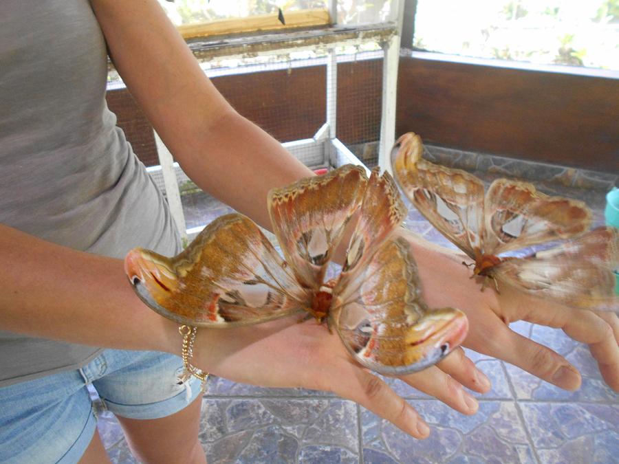 Theme - Parks - Bali Butterfly Park (1) Bali animal parks