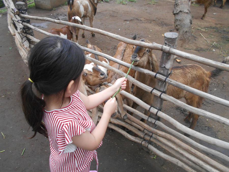 Theme - Parks - Bali Safari Marine Park (1) Bali animal parks