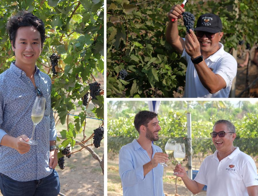 Hatten Wines Syrah Grapes Layout
