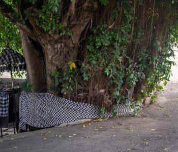 Banyan-Tree-Bali-Poleng