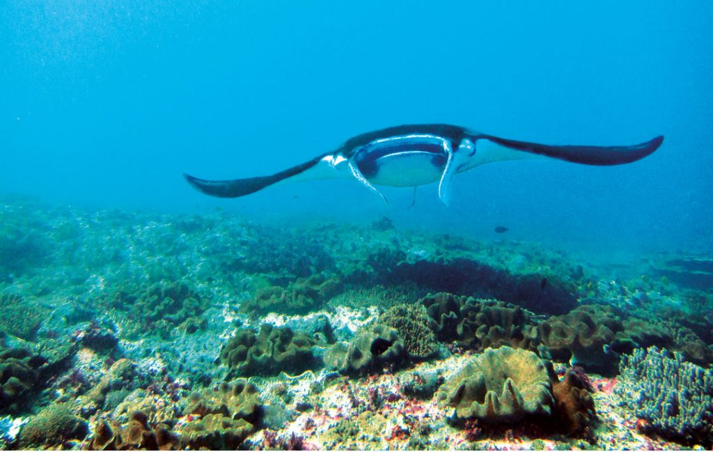 Diving in Bali - Nusa Penida Dive Sites - Manta Point