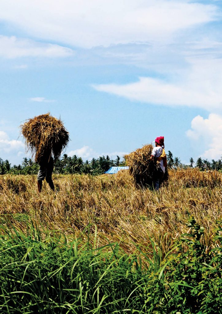 Pupuan Rice Field