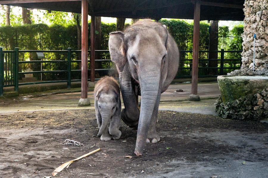 Mason Elephant Park Bali - Ubud 2