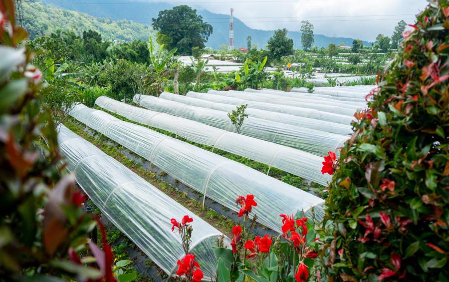 Bedugul Strawberry Farms - NOW! Bali
