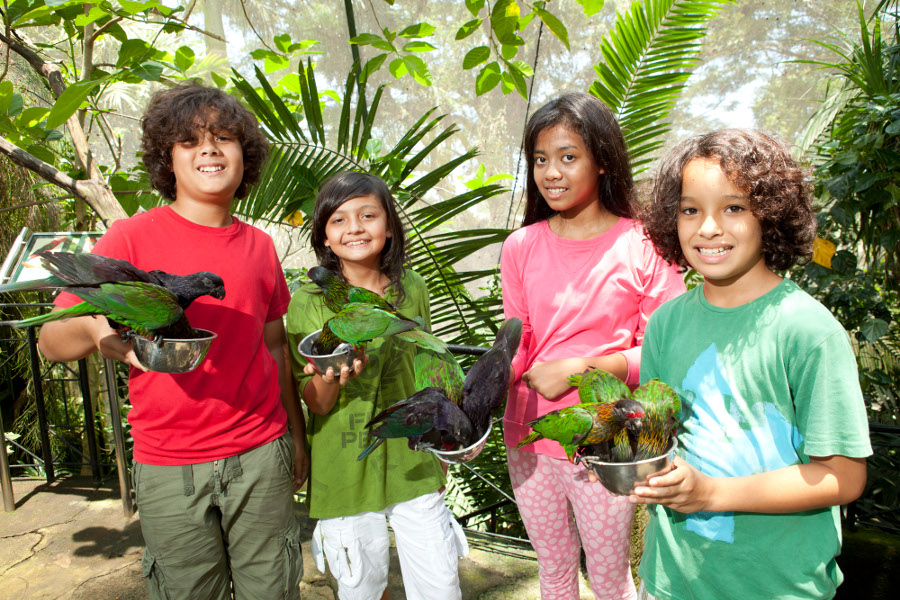 Bali for Kids - Bali Bird Park 3