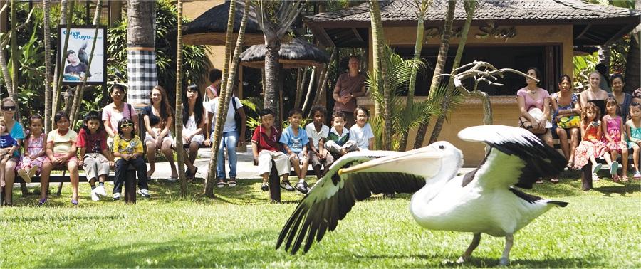 Bali for Kids - Bali Bird Park
