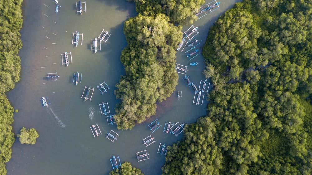 Wana-Segara-Kertih-Kedonganan-Mangrove-Bali