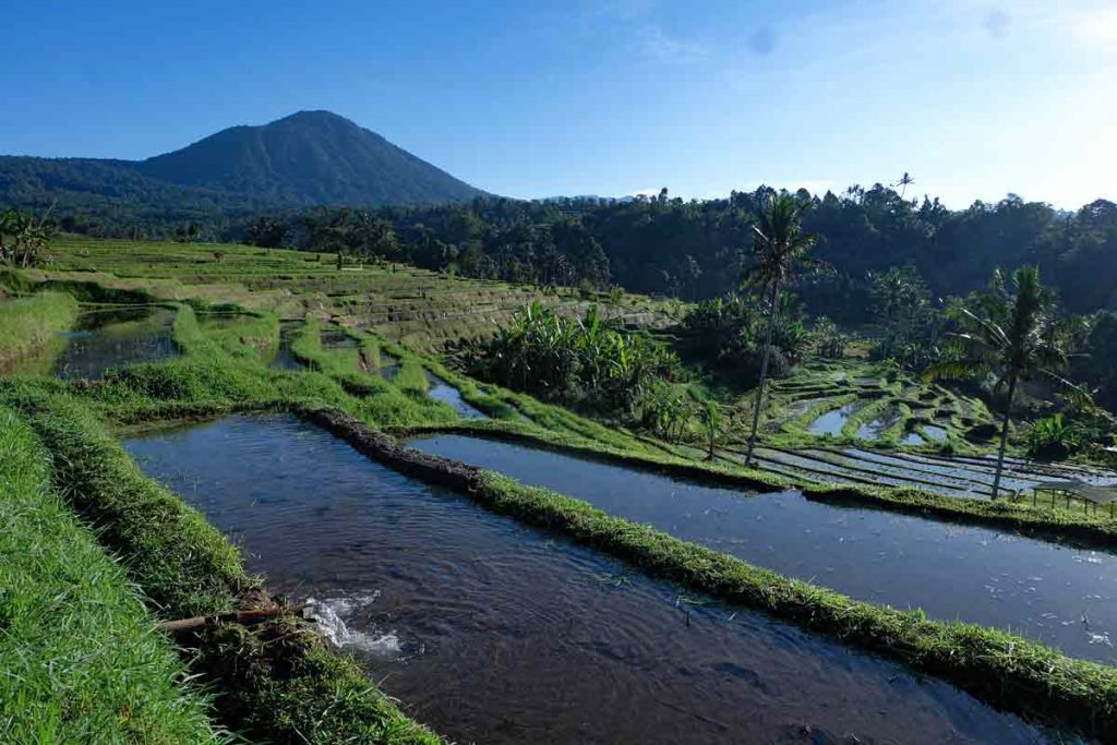 Jatiluwih Bali Subak Irrigation System (2)
